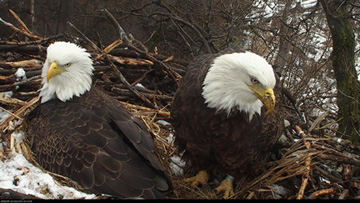 "DNR EagleCam Features One Of The Best ""Nature Shows"" Around"
