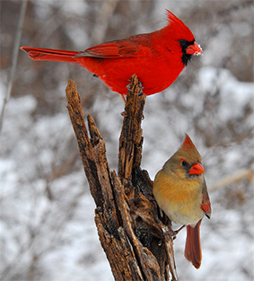 Spring Is Just Around The Corner At Minnesota State Parks