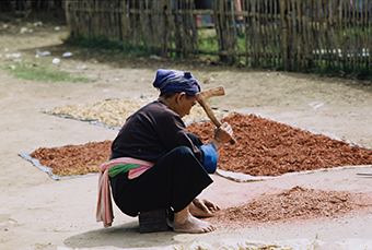 MINORS ASIA – #9 In A Series For Hmong Times – Hard Work