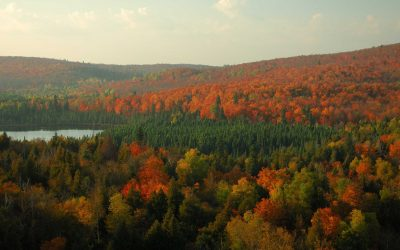 Don't Miss The Show On These Minnesota State Forest Fall Color Drives