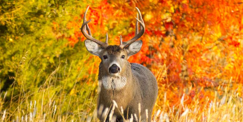 DNR Continues Chronic Wasting Disease Response With Two Special Hunts
